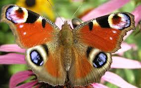 Как гусеница превращается в бабочку?