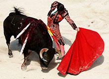 Почему быки набрасываются на красную одежду?