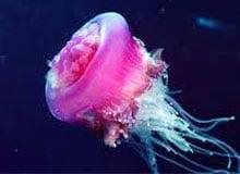 Почему медуза жалит?