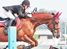 Когда начались конные состязания?