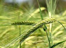 Как распространяются семена травы?