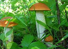 Как растут грибы?