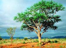 Чем питаются деревья?