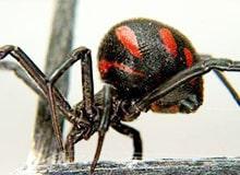 Почему некоторые насекомые вредны для человека?