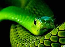 Где у змеи сердце?