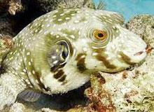 Какими были первые рыбы?