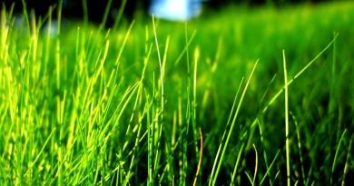 зеленая трава потому.ру